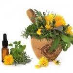 Fleurs pour phytothérapie